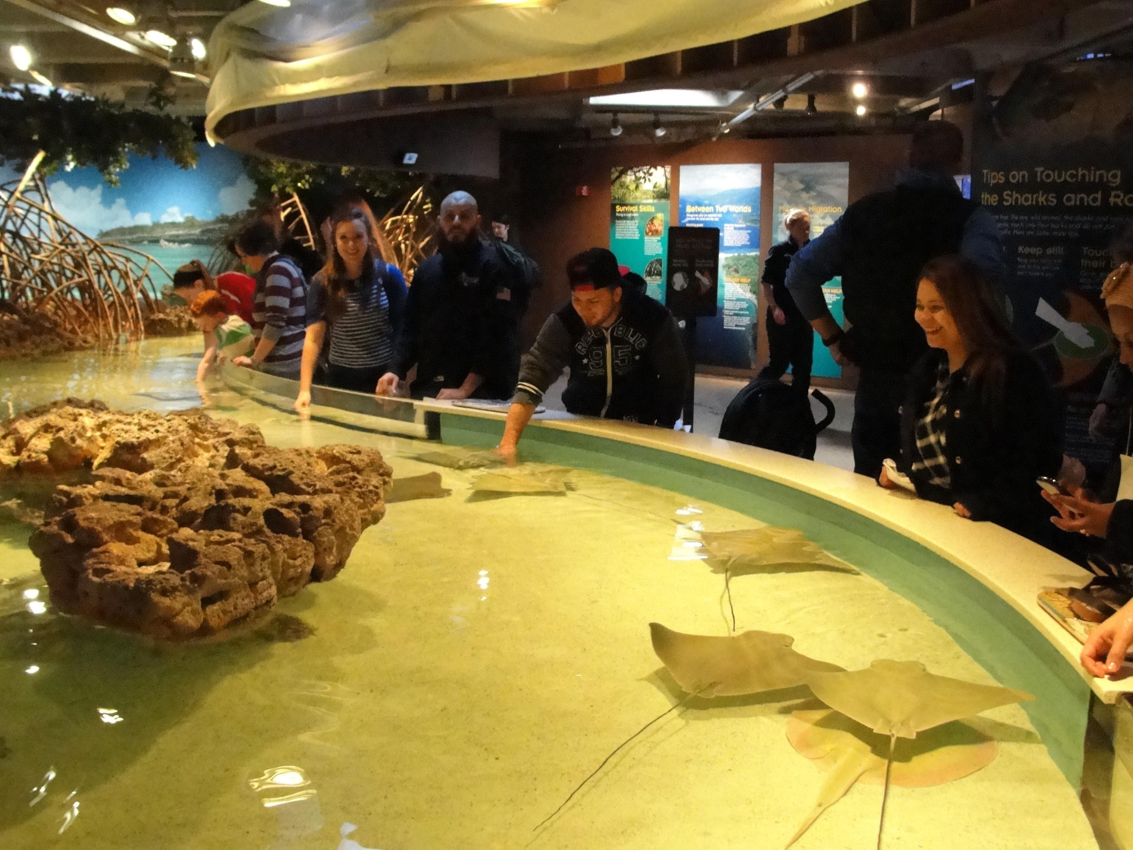 Aquarium 2015